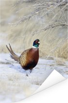 Fazant loopt door de sneeuw tijdens de winter Poster 80x120 cm - Foto print op Poster (wanddecoratie woonkamer / slaapkamer)