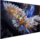 Mooie clownvis Aluminium 180x120 cm - Foto print op Aluminium (metaal wanddecoratie) XXL / Groot formaat!