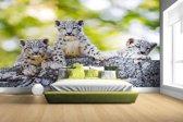 Drie luipaard welpen fotoprint Fotobehang 380x265
