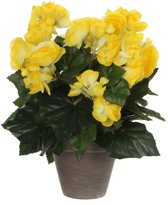 Mica Decorations - Begonia H30D25 Geel In Pot Stan D11.5 Grey