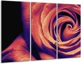 Glasschilderij Roos | Bruin, Zwart | 120x80cm 3Luik | Foto print op Glas |  F003582