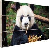 Panda die bamboe eet Hout 30x20 cm - Foto print op Hout (Wanddecoratie)