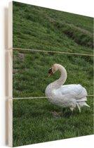 Een witte trompetzwaan in het gras Vurenhout met planken 60x90 cm - Foto print op Hout (Wanddecoratie)