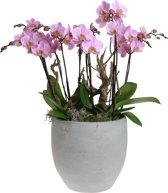 Opulent bliss - orchidee creatie
