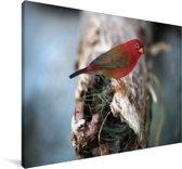 Vuurvink op een boomstronk Canvas 30x20 cm - klein - Foto print op Canvas schilderij (Wanddecoratie woonkamer / slaapkamer)
