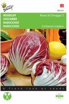 Roodlof Palla Rossa Cichorium endivia - set van 7 stuks