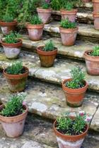 Flowers in Terracotta Pots on the Garden Steps Spring Journal