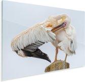 Roze pelikaan verzorgt zichzelf op een paaltje Plexiglas 180x120 cm - Foto print op Glas (Plexiglas wanddecoratie) XXL / Groot formaat!
