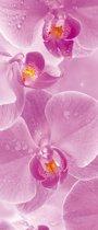 Fotobehang Flowers Orchids | DEUR - 211cm x 90cm | 130g/m2 Vlies
