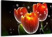 Canvas schilderij Tulp | Rood, Geel, Zwart | 140x90cm 1Luik