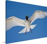 Een Zwaluwstaartmeeuw in de blauwe lucht Canvas 120x80 cm - Foto print op Canvas schilderij (Wanddecoratie woonkamer / slaapkamer)