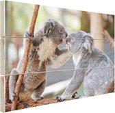 Twee koalaberen op tak Hout 60x40 cm - Foto print op Hout (Wanddecoratie)