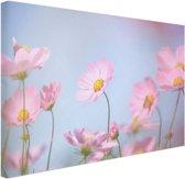 FotoCadeau.nl - Prachtige lichtroze bloemen Canvas 60x40 cm - Foto print op Canvas schilderij (Wanddecoratie)