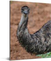 Een donkere emoe staart recht in de camera Aluminium 120x160 cm - Foto print op Aluminium (metaal wanddecoratie) XXL / Groot formaat!