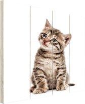 Zittend katje Hout 80x120 cm - Foto print op Hout (Wanddecoratie)