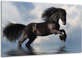 Glasschilderij Paard   Zwart, Blauw, Wit   120x70cm 1Luik   Foto print op Glas    F002918