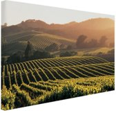 Wijngaarden in de Verenigde Staten Canvas 180x120 cm - Foto print op Canvas schilderij (Wanddecoratie woonkamer / slaapkamer) XXL / Groot formaat!