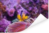Knalroze waterplanten met een zwemmende Anemoon-vis in een aquarium Poster 180x120 cm - Foto print op Poster (wanddecoratie woonkamer / slaapkamer) XXL / Groot formaat!
