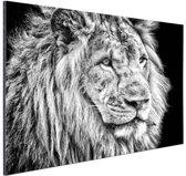 Leeuw in de winter  Aluminium 60x40 cm - Foto print op Aluminium (metaal wanddecoratie)