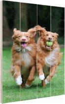 Twee honden spelen met bal Hout 20x30 cm - klein - Foto print op Hout (Wanddecoratie)