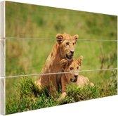 Twee welpen in gras Hout 120x80 cm - Foto print op Hout (Wanddecoratie)