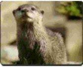Otter  Muismat