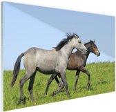 FotoCadeau.nl - Bruin en grijs paard Glas 60x40 cm - Foto print op Glas (Plexiglas wanddecoratie)