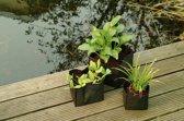5 stuks Vijverplantzakje vierkant 25x25x20 cm