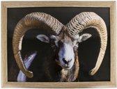 Schootkussen Ram
