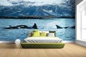 Fotobehang vinyl - Groep orkas breedte 380 cm x hoogte 265 cm - Foto print op behang (in 7 formaten beschikbaar)