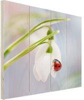 Lieveheersbeestje op een sneeuwklokje Hout 60x80 cm - Foto print op Hout (Wanddecoratie)