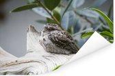 Uilnachtzwaluw in een boom Poster 90x60 cm - Foto print op Poster (wanddecoratie woonkamer / slaapkamer)
