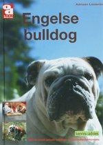 Engelse bulldog - OD Kennis & Advies boek