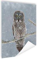 Uil in de sneeuw Poster 60x90 cm - Foto print op Poster (wanddecoratie woonkamer / slaapkamer) / Dieren Poster