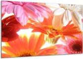 Glasschilderij Bloem | Oranje, Wit, Geel | 120x70cm 1Luik | Foto print op Glas |  F000636
