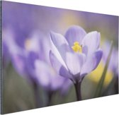 Bloeiende paarse bloem Aluminium 90x60 cm - Foto print op Aluminium (metaal wanddecoratie)