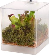 Swampworld Mini Terrarium - LED Verlichting - Vleesetende Plant - Trompetbekerplant
