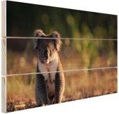 Koala op de grond zonsondergang Hout 120x80 cm - Foto print op Hout (Wanddecoratie)