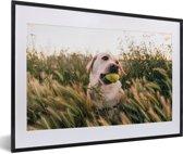 Foto in lijst - Labrador Retriever speelt met een tennisbal tussen het gras fotolijst zwart met witte passe-partout 60x40 cm - Poster in lijst (Wanddecoratie woonkamer / slaapkamer)