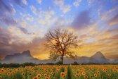 Papermoon Sunflower Scenery Vlies Fotobehang 250x186cm 5-Banen