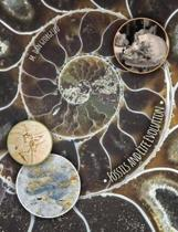 Fossils and Life Evolution