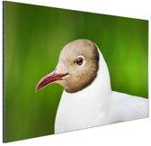 Meeuw met zwarte kop Aluminium 60x40 cm - Foto print op Aluminium (metaal wanddecoratie)