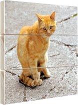Rode kat op straat Hout 20x20 cm - klein - Foto print op Hout (Wanddecoratie)