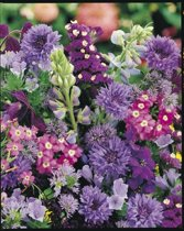 Veldbloemen Blauwe tinten 25 gram