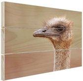 Portret struisvogel Hout 80x60 cm - Foto print op Hout (Wanddecoratie)