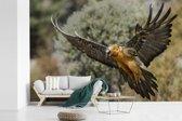 Fotobehang vinyl - Lammergier met uitgestrekte vleugels breedte 360 cm x hoogte 240 cm - Foto print op behang (in 7 formaten beschikbaar)