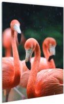 Flamingos in de regen Glas 60x90 cm - Foto print op Glas (Plexiglas wanddecoratie)