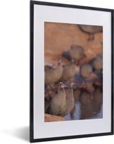 Foto in lijst - Groep helmparelhoenders aan het water fotolijst zwart met witte passe-partout 40x60 cm - Poster in lijst (Wanddecoratie woonkamer / slaapkamer)