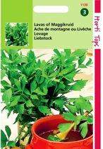 Lavas of Maggikruid - Levisticum officinalis - set van 7 stuks
