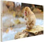 Japanse babysneeuwaap Hout 60x40 cm - Foto print op Hout (Wanddecoratie)